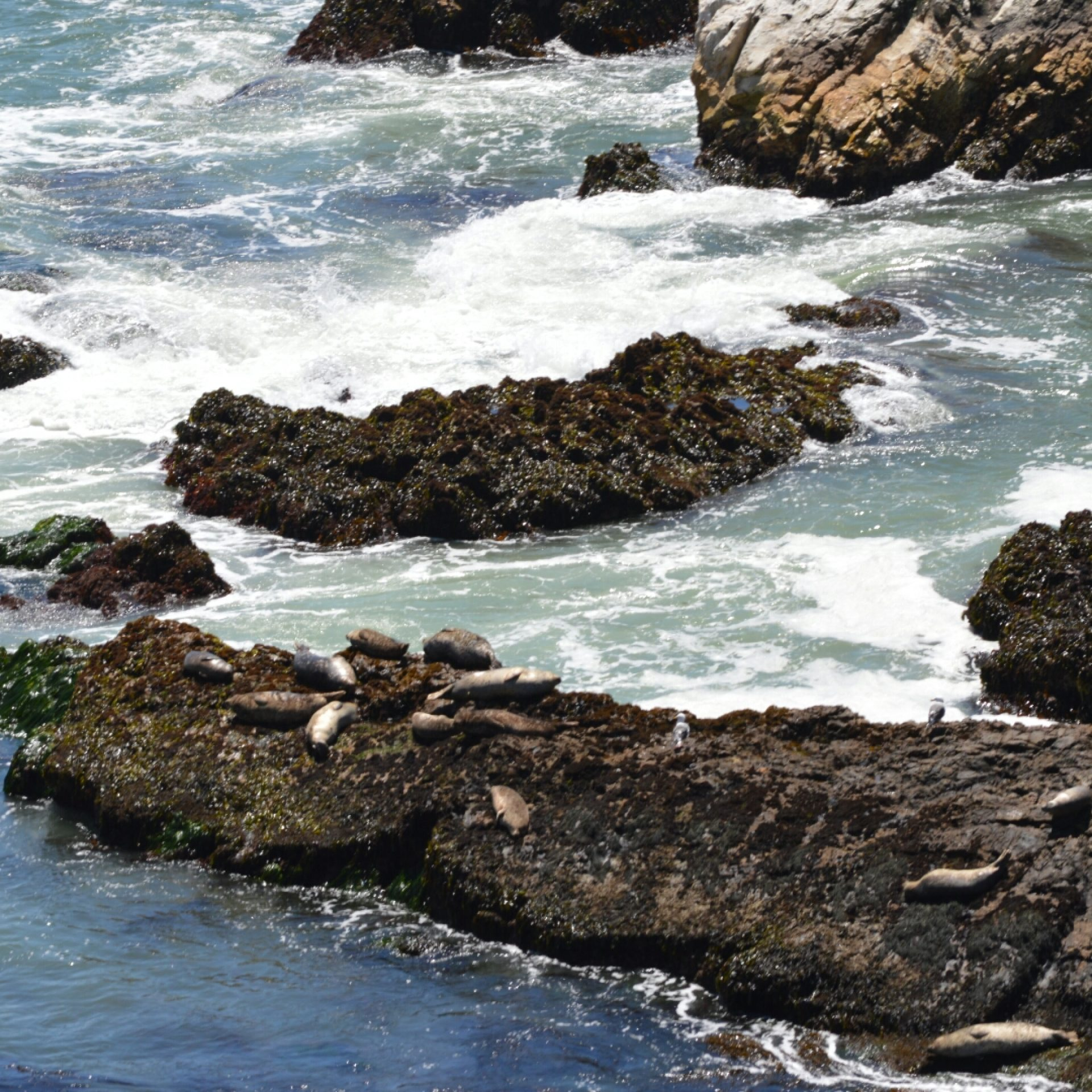 Seals rest on rocky coastline